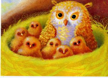 Owls041